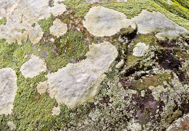 Lichen patterns on bare rock