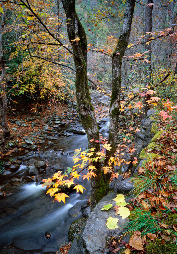 Autumn scene in the Smoky Mountains © William Britten use with permission only