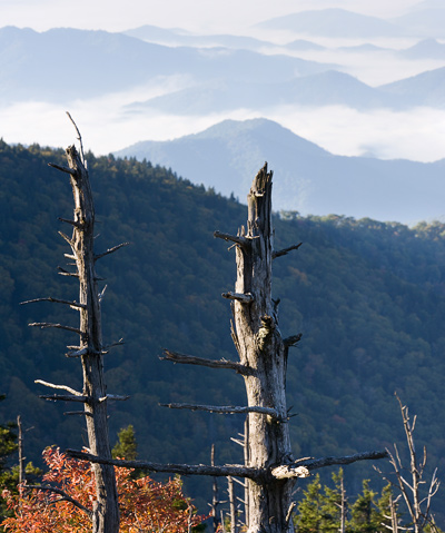 Dead Trees on Clingmans Dome