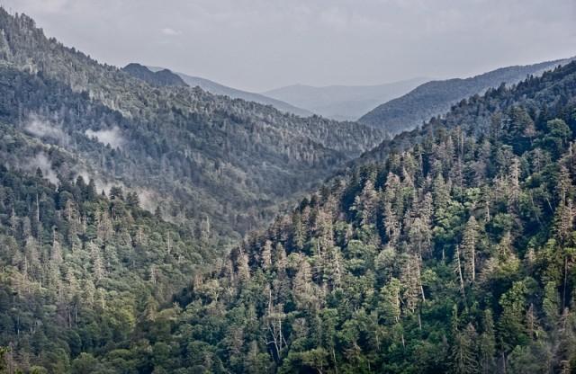 Smoky Mountains Mist