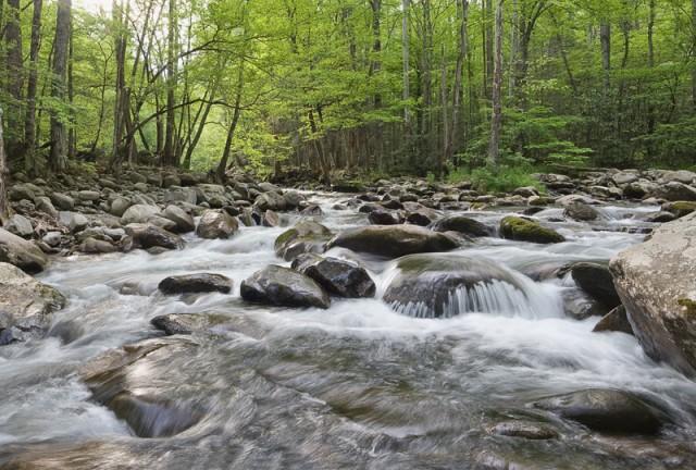 Smoky Mountain creek in springtime