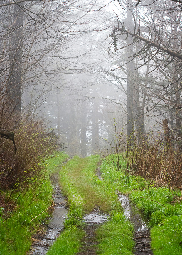 Smoky Mountain Trail in Fog