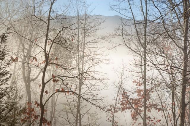 Mt. LeConte in fog