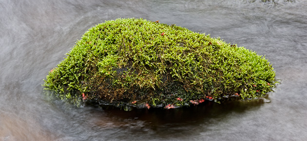 Moss-covered rock of the Roaring Fork