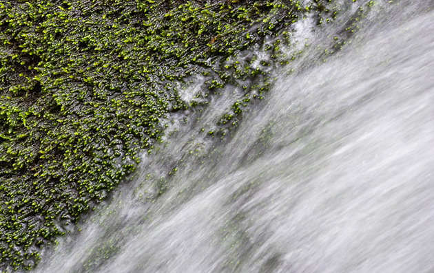 Detail of moss and flowing water
