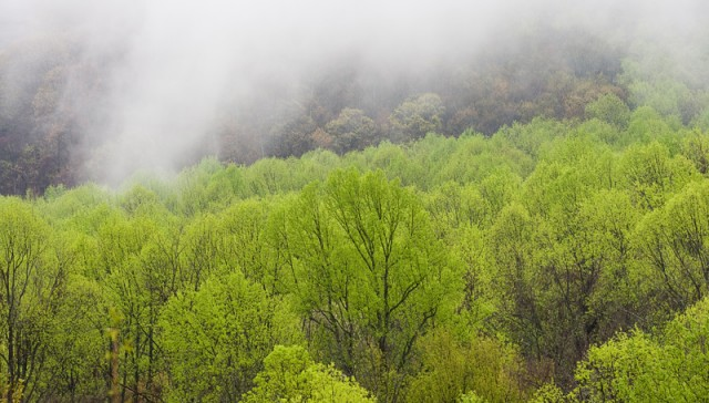 Smoky Mountains Spring Mist  © William Britten use with permission only