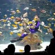 Down at the Gatlinburg Aquarium