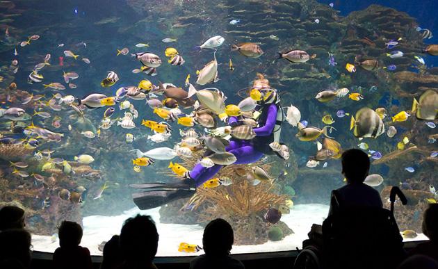 Gatlinburg Aquarium © William Britten use with permission only