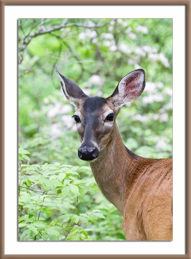 Wordless Wednesday: Doe, a Deer