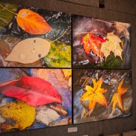 Large Leaf Set returns to William Britten Gallery