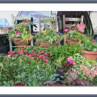 Wordless Wednesday: Truck Garden