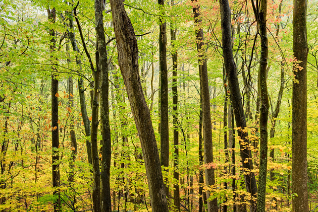 Smoky Mountains Autumn Woods © William Britten use with permission only