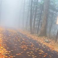 Roaring Fork in the Fog