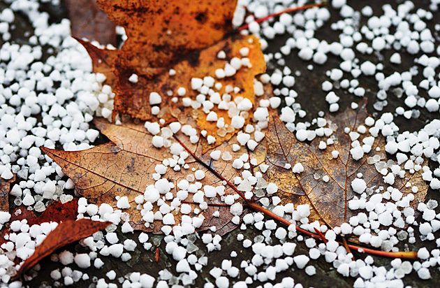 Little ice pellets © William Britten use with permission only