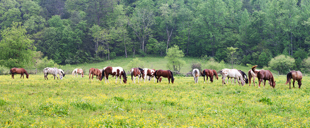 Smoky Mountain Riding Horses © William Britten use with permission only