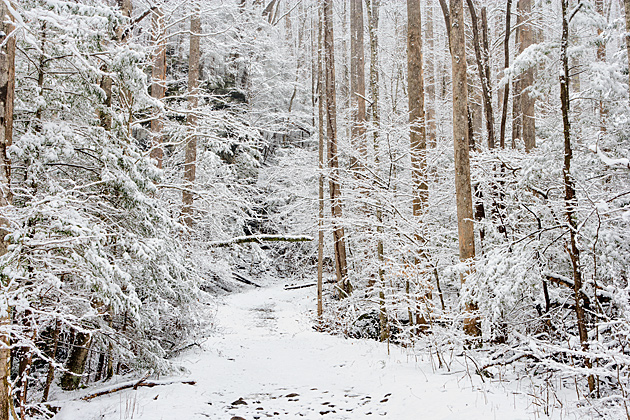 Ramsay Cascades Trail in Winter © William Britten use with permission only