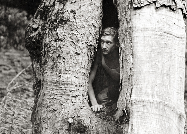 Harvey Broome in a Buckeye Tree, 1931 © University of Tennessee Libraries