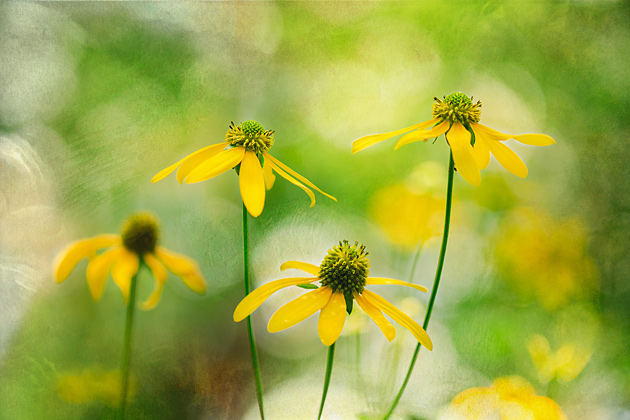 Smoky Mountains Wildflower Wallpaper