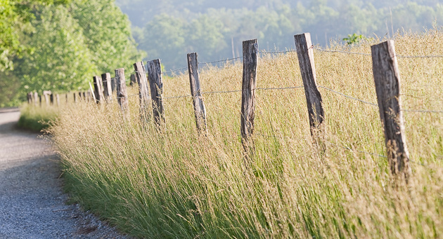 Barbed Wire Fence in Cades Cove © William Britten use with permission only