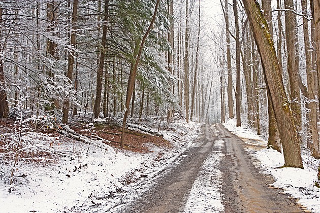 Winter Road in the Greenbrier in the Smoky Mountains