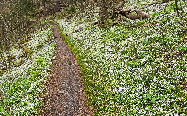 Spring comes to the Appalachian Trail