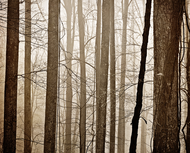 Smoky Mountains Woods in Fog