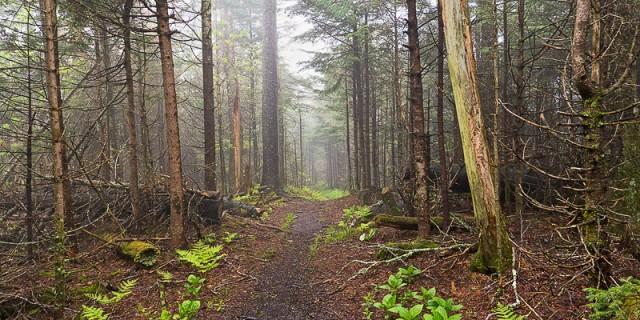 Along the Noland Divide Trail