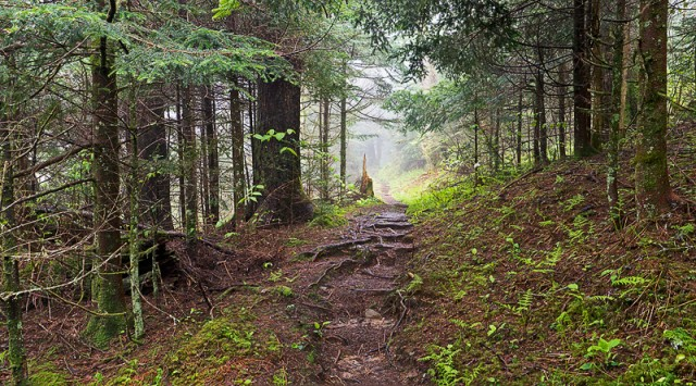 Smoky Mountains Trail