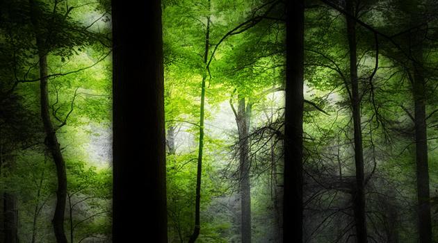 Smoky Mountains photos: deep dark woods