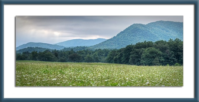 Cades Cove Summer Morning