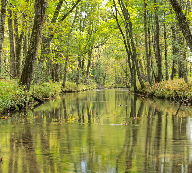 Reflections on Abrams Creek
