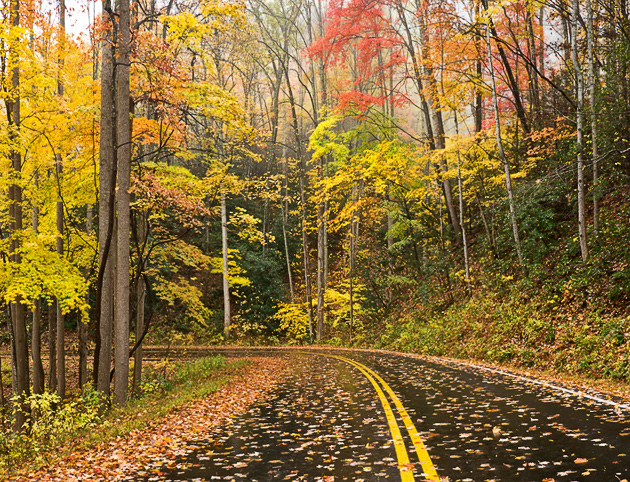 Driving through a Smoky Mountains Autumn