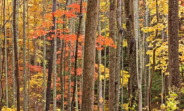 Smoky Mountains photos of Autumn woods