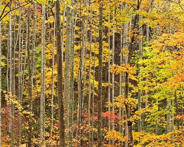 Smoky Mountains photos: autumn woods