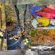 Wordless Wednesday: Autumn Montage
