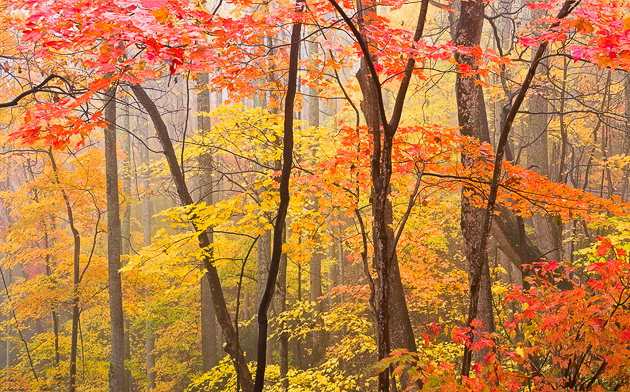 Smoky Mountains autumn woods