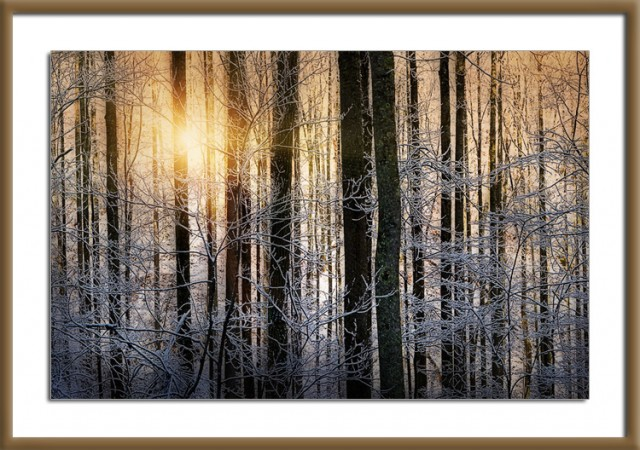 Smoky Mountains Sunrise in Winter Woods