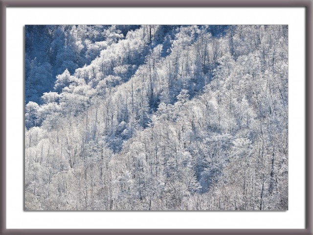 Smoky Mountains photo: winter trees
