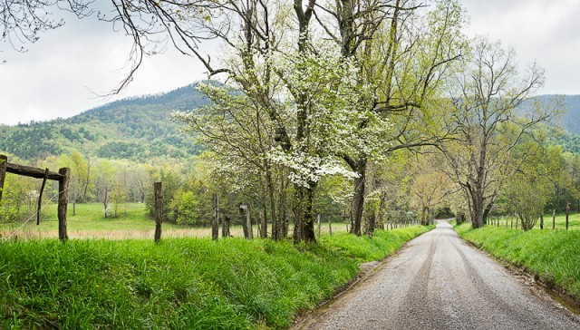 Springtime in Cades Cove
