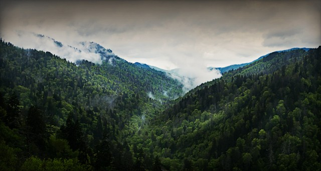 On the road up to Newfound Gap