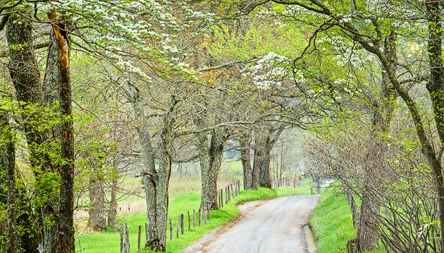 Dogwood lane in Cades Cove