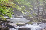 Smoky Mountains photos: Dogwood Rain
