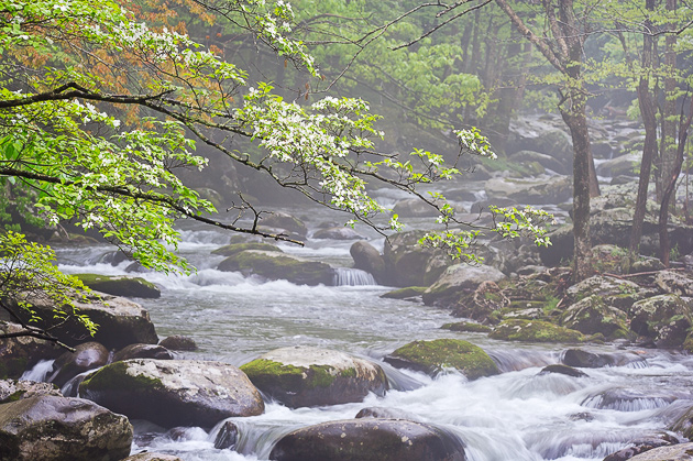 Smoky Mtns photos: Dogwood Rain
