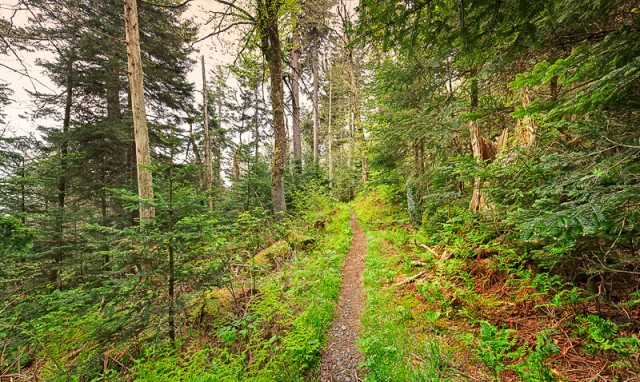 High-elevation trail in the Smokies