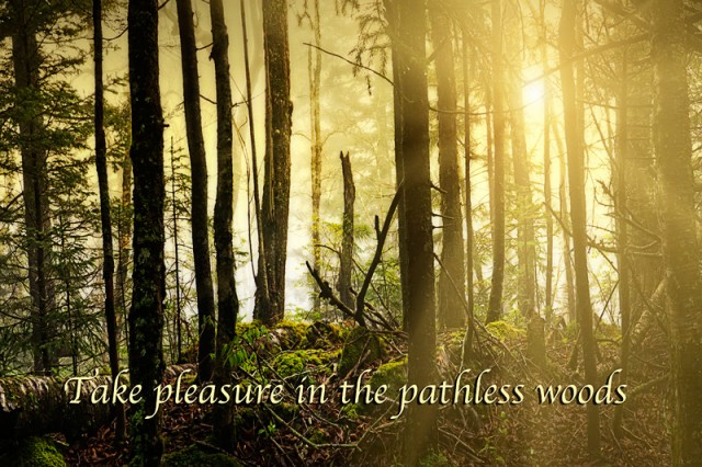 Pleasure of the Pathless Woods
