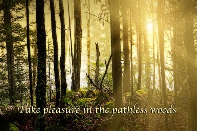 Pleasure of the Pathless Woods