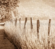 Summer Fence in Sepia