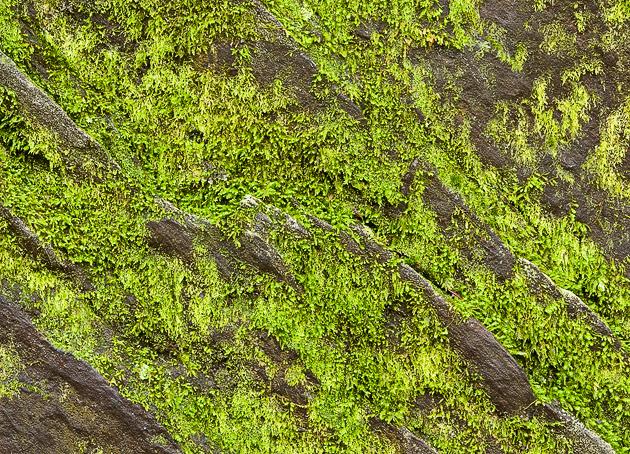 Lichen in Winter