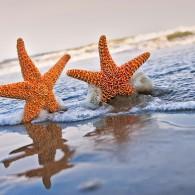 Miles Away on Monday: Beach Trip!