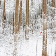 Featured Photo: Winter Silence